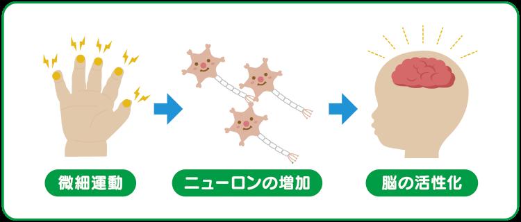 微細運動 ニューソンの増加 脳の活性化